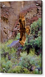 Acrylic Print featuring the photograph Golden Flight  by Britt Runyon