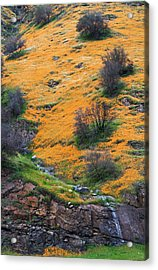 Golden Hills Acrylic Print by Floyd Hopper