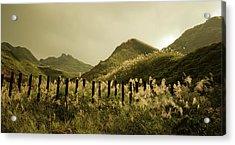 Golden Hills Acrylic Print by Tnwy