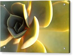 Golden Hour Acrylic Print