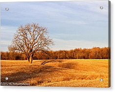 Acrylic Print featuring the photograph Golden Hour Shadows by Rachel Cohen