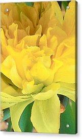 Golden Acrylic Print by Wide Awake Arts