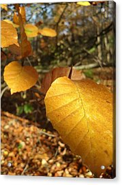 Golden Leaves Acrylic Print by Michael Standen Smith