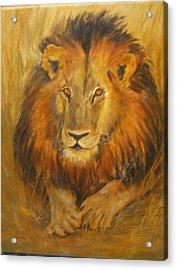 Golden Lion Acrylic Print by Maureen Pisano