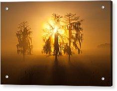 Golden Morning Acrylic Print by Claudia Domenig