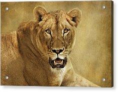 Golden Acrylic Print