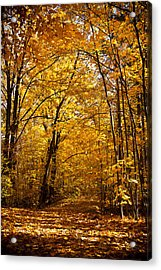 Golden Path Acrylic Print by Kamil Swiatek