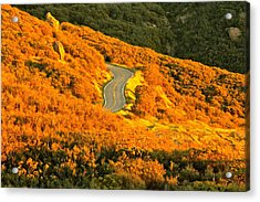 Golden Road Acrylic Print by Michael Cinnamond