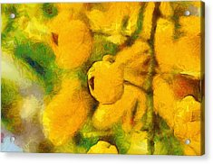 Golden Shower Acrylic Print