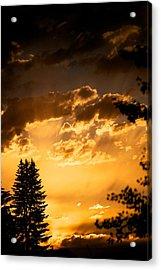Golden Sky Acrylic Print by Kevin Bone