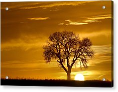 Golden Sunrise Silhouette Acrylic Print by James BO  Insogna