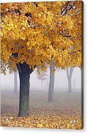 Golden Tree Acrylic Print