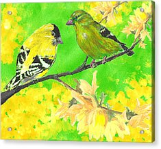 Goldfinches And Forsythia Acrylic Print by Forrest C Greenslade PhD