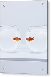 Goldfish In Separate Fishbowls Looking Face To Face Acrylic Print by Adam Gault
