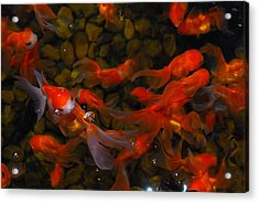 Goldfish Acrylic Print by Luis Esteves