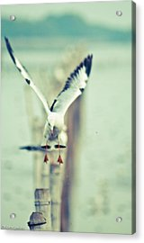 Gonna Landing Now Acrylic Print by Kornrawiee Miu Miu