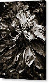 Good Luck Plant Acrylic Print