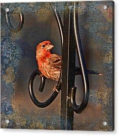 Good Moning Sunshine IIi Acrylic Print by Debbie Portwood
