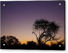 Good Morning Africa  Acrylic Print