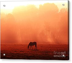 Good Morning Horse Acrylic Print