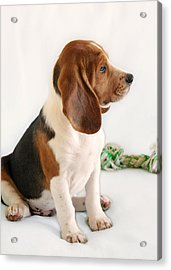 Good Ol' Snoopy Acrylic Print by Christine Till