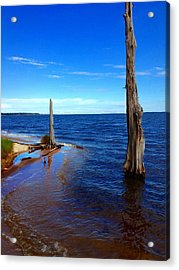 Goose Creek State Park Acrylic Print by Joan Meyland