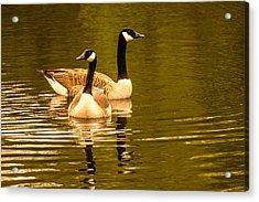 Goose Love Acrylic Print