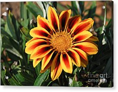 Gorgeous Beauty Acrylic Print by Fotosas Photography