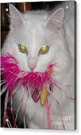 Acrylic Print featuring the photograph Got It by Judy Via-Wolff
