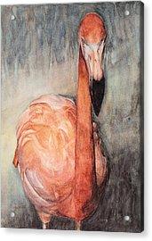Got Shrimp? Acrylic Print by Kathy Michels