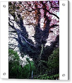 Gothic Tree On Admiral's Row Acrylic Print