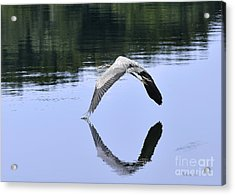 Acrylic Print featuring the photograph Graceful Heron by Nava Thompson