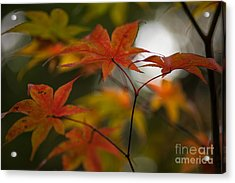 Graceful Layers Acrylic Print by Mike Reid