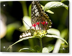 Graceful Acrylic Print by Leslie Leda