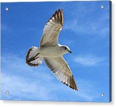 Graceful Seagull Acrylic Print