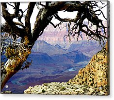 Grand Canyon 8 Acrylic Print