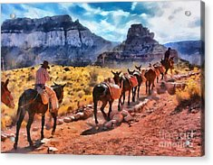 Grand Canyon Mules Heading Up The South Kaibab Trail Acrylic Print