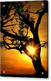 Acrylic Print featuring the photograph Grand Canyon Sunset by Cindy Wright