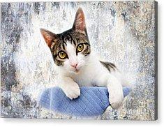 Grand Kitty Cuteness 2 Acrylic Print by Andee Design