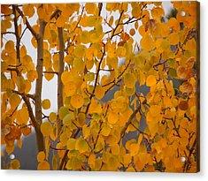 Grand Lake Aspen Acrylic Print