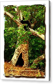 Grand Old Sycamore Tree Ahmanson Ranch Calabasas Acrylic Print by Noah Brooks