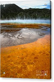 Grand Prismatic Spring Acrylic Print by Gregory Dyer