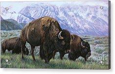 Grand Teton Bison Acrylic Print by Deb LaFogg-Docherty