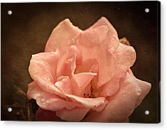 Grandmas Bloom Acrylic Print by Terrie Taylor