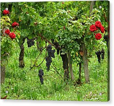 Grape Vines And Roses I Acrylic Print by Greg Matchick