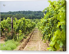 Grape Vines At Fall Creek Vineyards Acrylic Print by James Forte