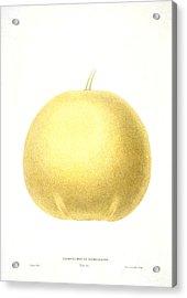 Grapefruit Acrylic Print by Granger