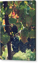 Grapes Acrylic Print by Laurie Search