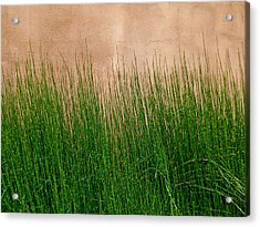 Acrylic Print featuring the photograph Grass And Stucco by David Pantuso
