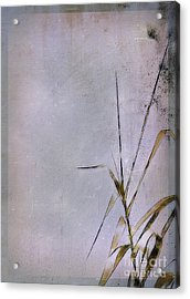 Grass And Wall Acrylic Print by Judi Bagwell